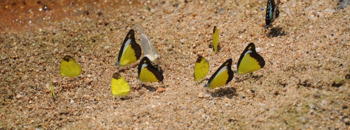 Malaysia: Close to Nature on Lake Kenyir