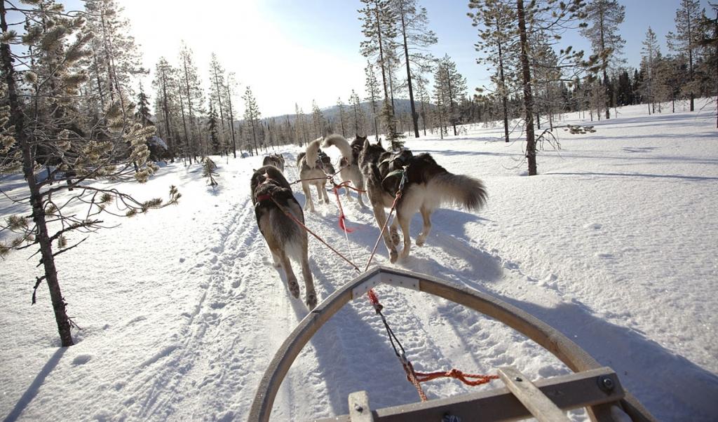 husky sledging