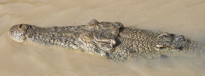 Visiting crocodile territory