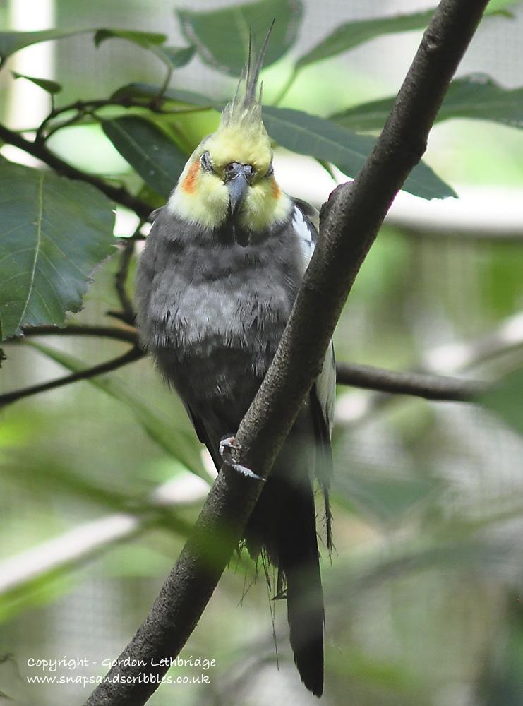 Outback birdlife 4