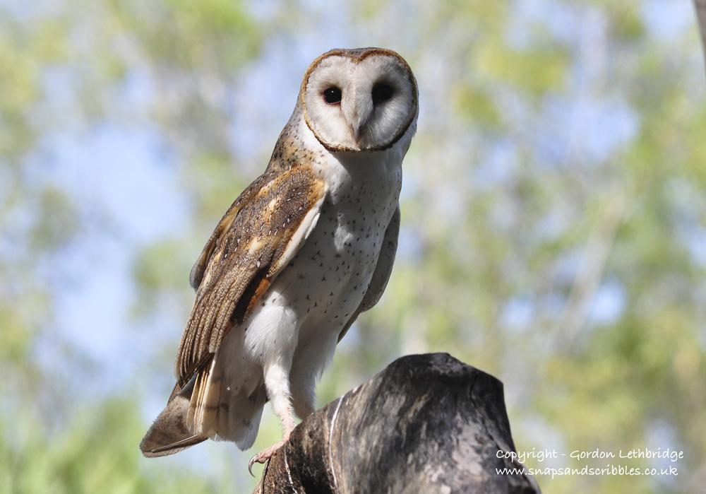 outback birdlife 11