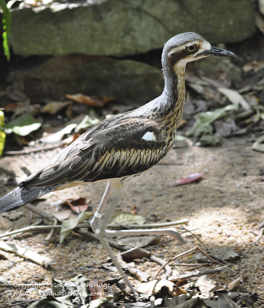 outback birdlife 6