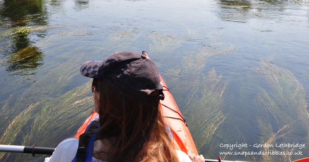 The aquatic plant life was a sign that the river was pollution free