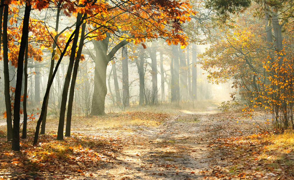 Scenes like this are typical of the New Forest in Autumn © www.depositphotos.com/