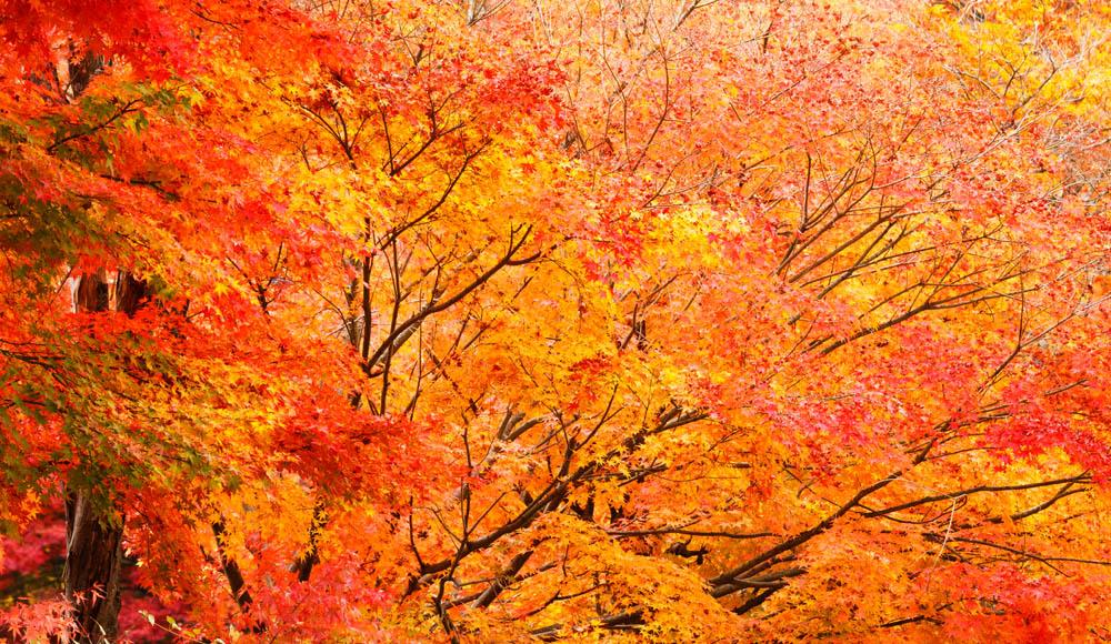 © www.depositphotos.com/leungchopan