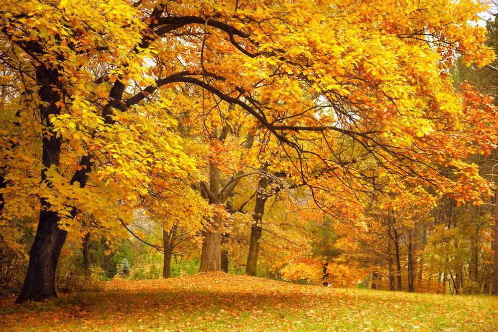 © www.depositphotos.com/