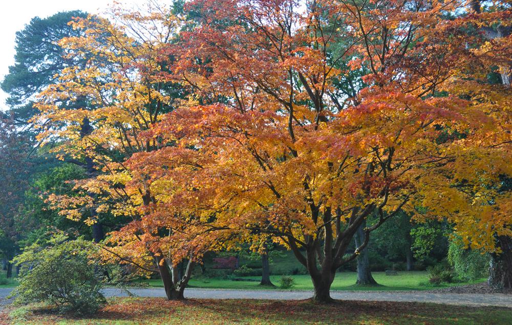 The colours of autumn - © Gordon Lethbridge