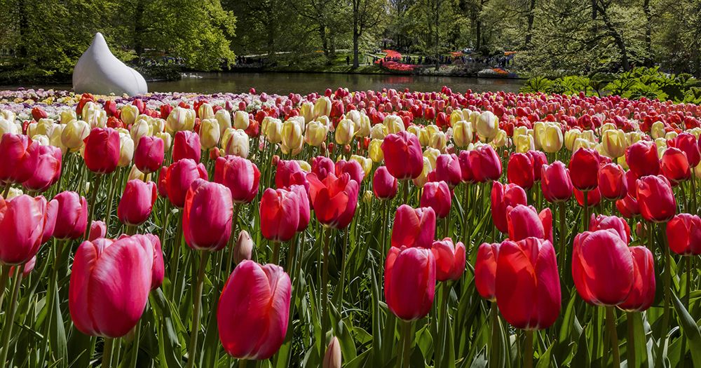 The tulip bulb sculpture is a permanent fixture and is always surrounded by a colourful array of flowering tulips