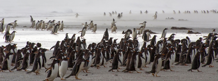 Penguins: Where to see them