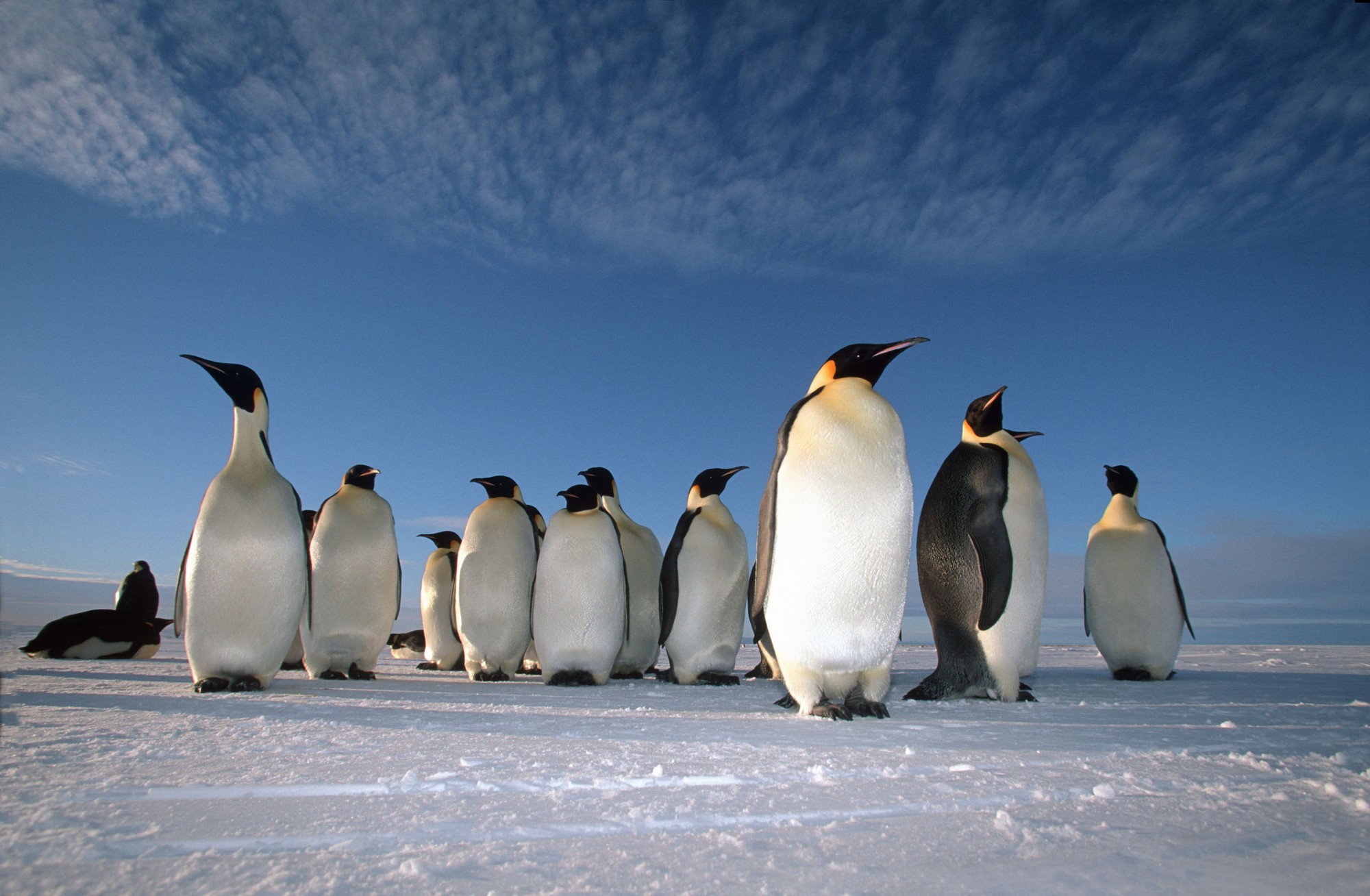 Emperor Penguins © Natural World Safaris