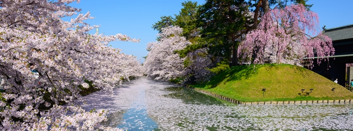 My top places to go to see cherry blossom
