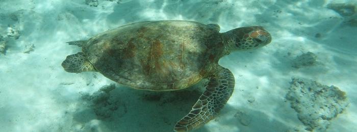 Snorkelling Western Australia's Ningaloo Reef