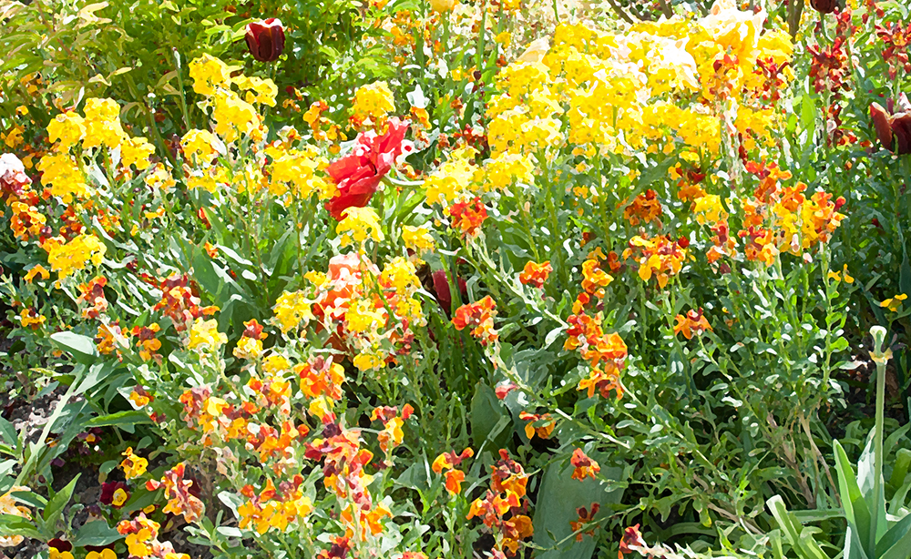Flowers in the Impressionist style - Claude Monet's Garden in Giverny
