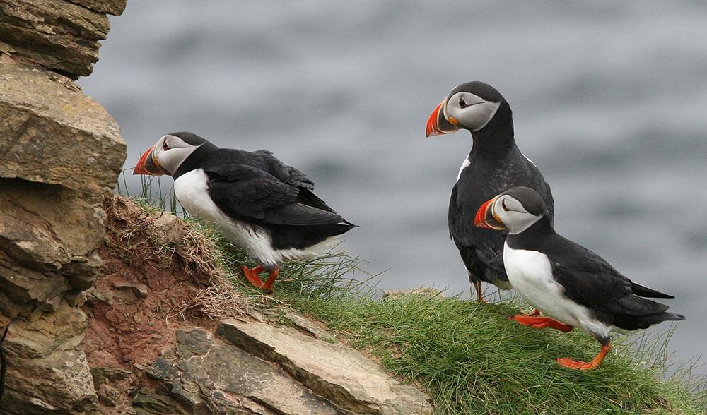 Pembrokeshire wildlife 001